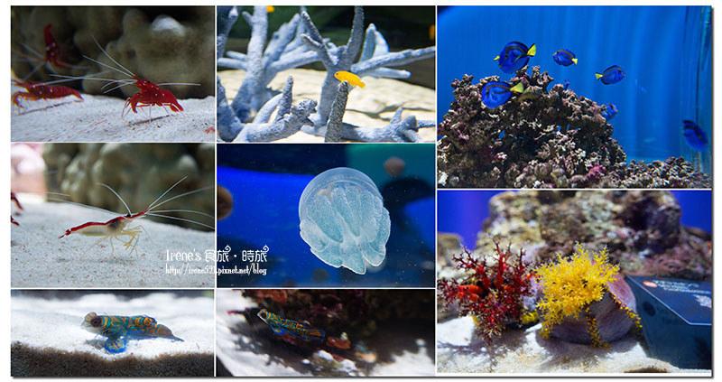 【大阪-景點】近距離的接觸,特別的海遊館/是水族館是動物園也是美術館/推薦親子同樂景點.nIFREL海遊館 @Irene's 食旅.時旅