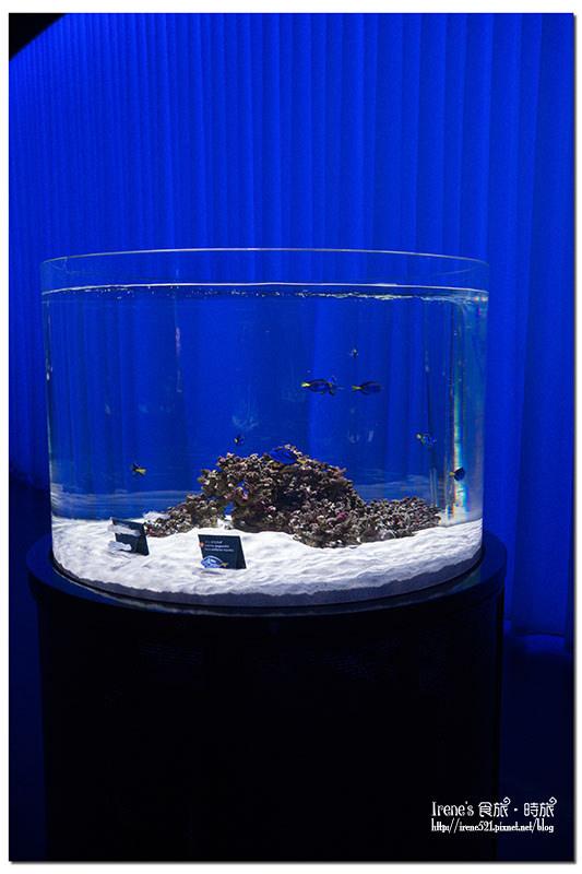 【大阪-景點】近距離的接觸,特別的海遊館/是水族館是動物園也是美術館/推薦親子同樂景點.nIFREL海遊館