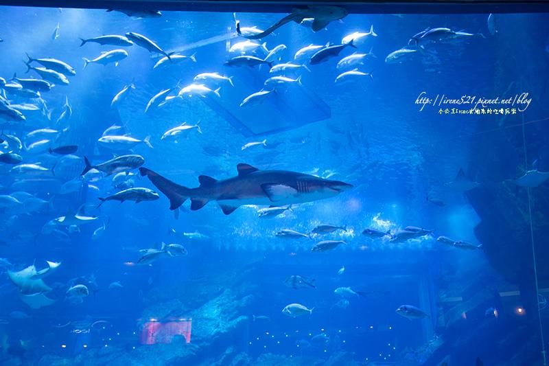 【杜拜】shopping mall裡面有鯊魚!杜拜購物中心Dubai Mall @Irene's 食旅.時旅