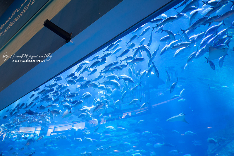 【杜拜】shopping mall裡面有鯊魚!杜拜購物中心Dubai Mall