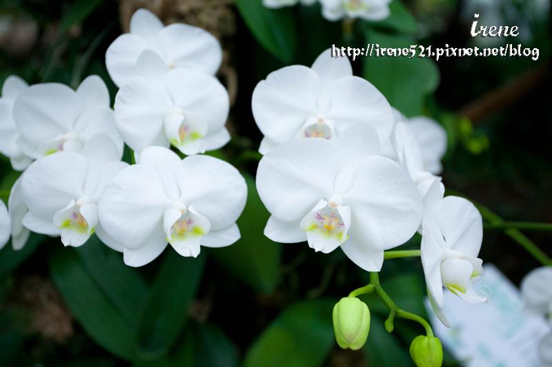 13.03.02-宜蘭礁溪蘭花園