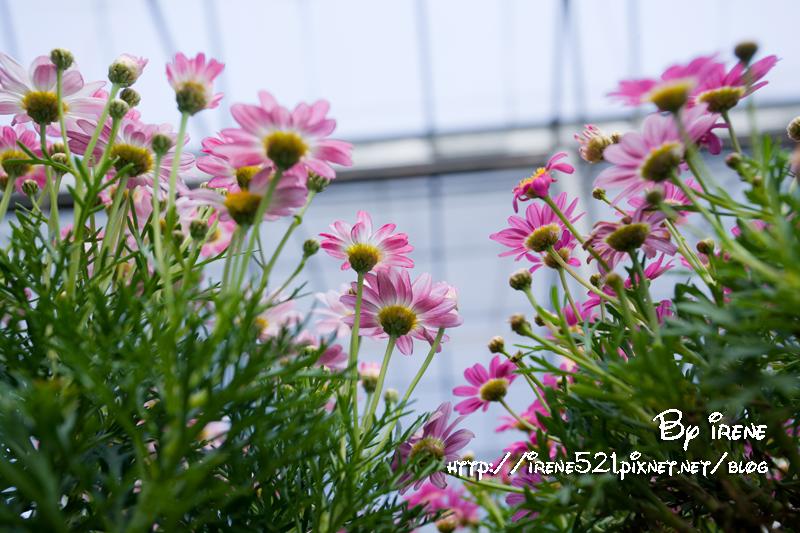 即時熱門文章:【台北】買盆栽其實也可以很優雅.社子花市-台北花卉村