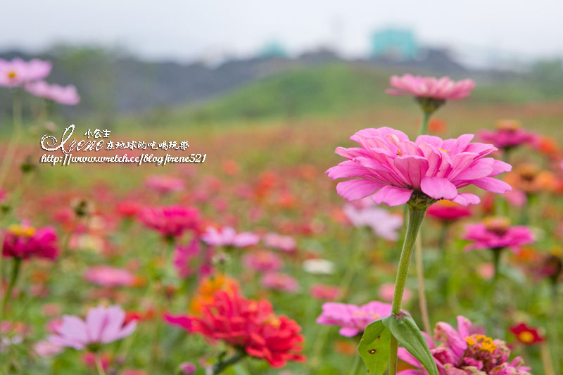 【南投】2012/12/16~2013/01/20‧南投花卉嘉年華 @Irene's 食旅.時旅