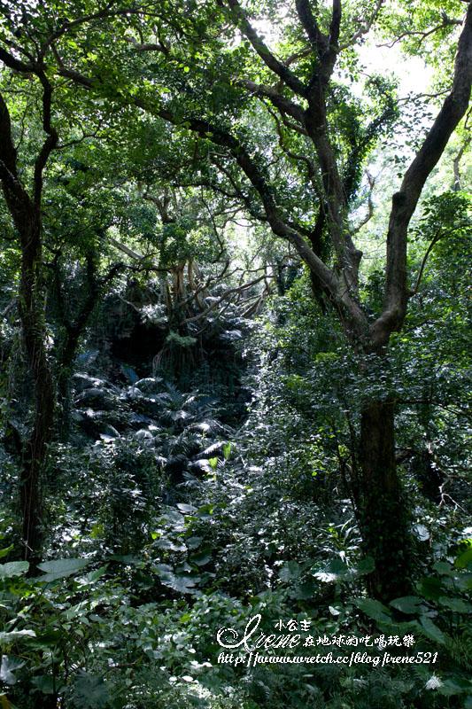 ガンガラーの谷 (Gangala之谷)