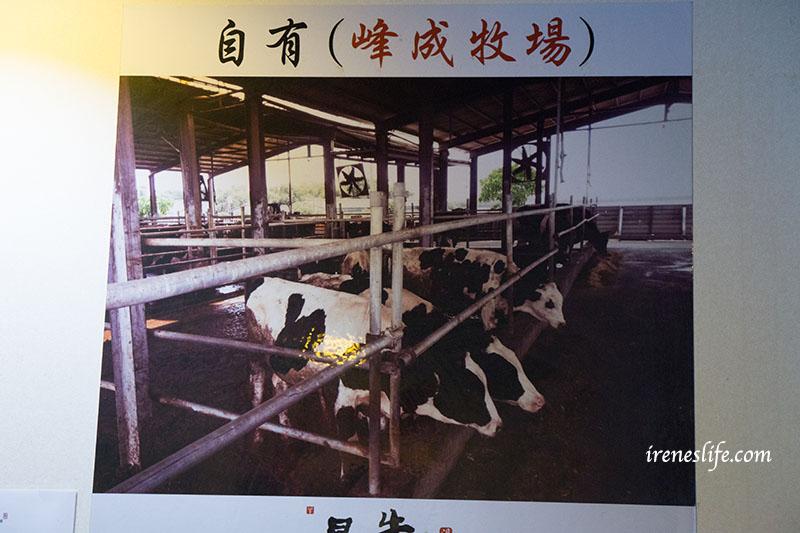 最牛溫體牛肉火鍋