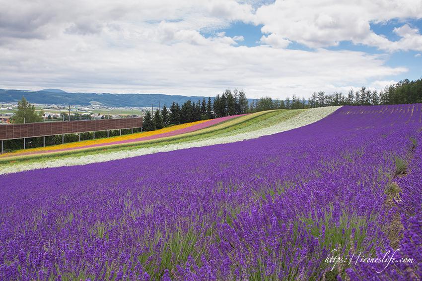 延伸閱讀:【北海道】富良野景點推薦,綿延與天際相連的夢幻花田,此生絕對要看一次.富田農場