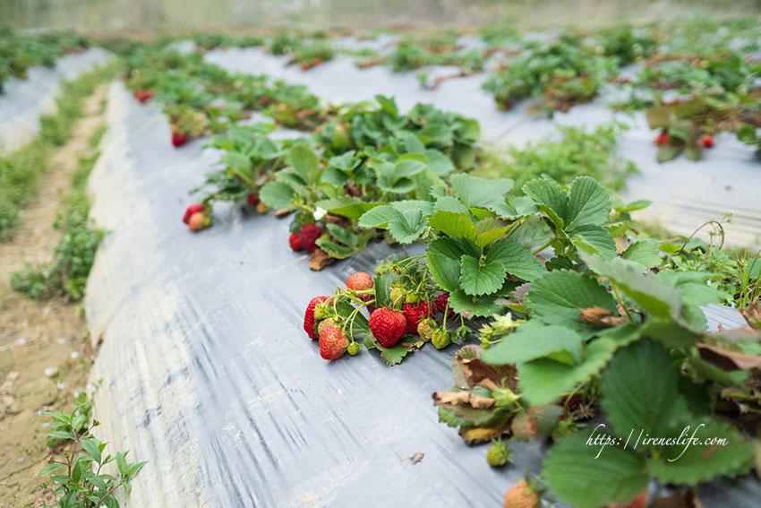即時熱門文章:【新竹】免門票,DIY採果樂,採番茄、草莓、甜椒超好玩,還可以自己搗麻糬.金勇DIY休閒農場
