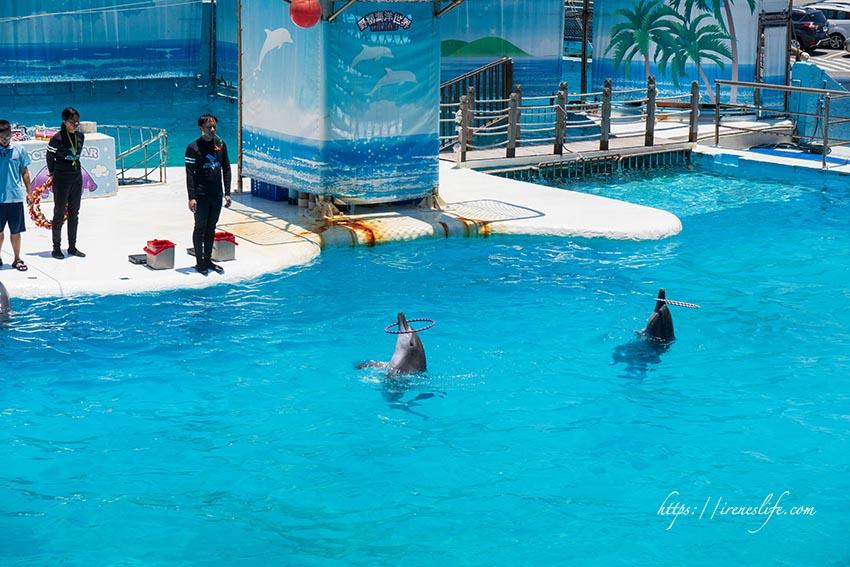 即時熱門文章:【萬里】北海岸推薦親子景點,海豚、海獅、高空跳水精采表演,豐富海洋生物展示.野柳海洋世界