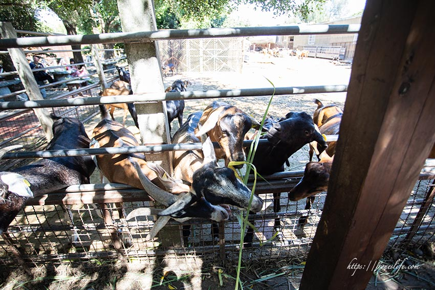 益健乳羊牧場