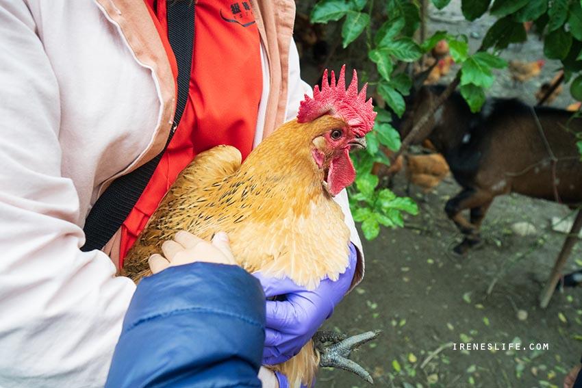 延伸閱讀:【桃園】全家大小一起來體驗開心農場!挖地瓜、撿雞蛋、拔蘿蔔、採水果,還能餵雞餵羊超好玩.一級棒農場