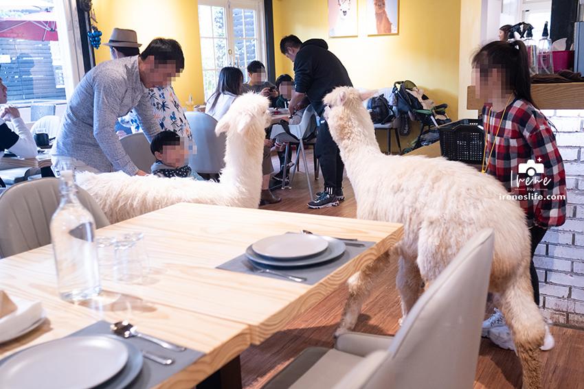 大衛小小羊 David& Alpaca