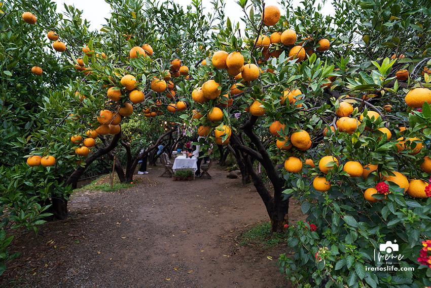 【苗栗】苗栗景觀餐廳,可以採橘子的橙香森林,橘子隧道、玻璃屋、大草皮、盪鞦韆、餵兔子的親子景點 @Irene's 食旅.時旅