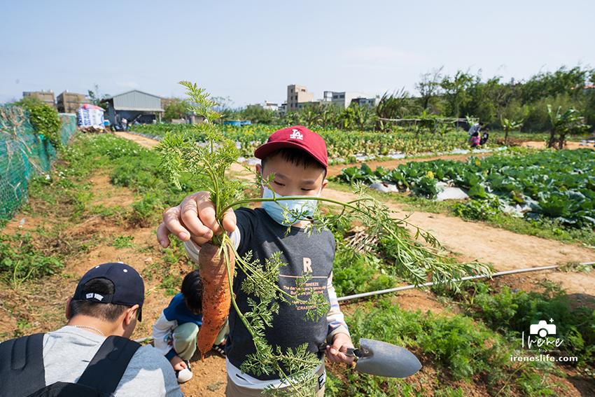 延伸閱讀:【桃園親子農場】都市裡的開心農場,採收高麗菜、蘿蔔、蔥、控窯,還有雞腿、甕仔雞可以品嚐.文新小農夫親子農園